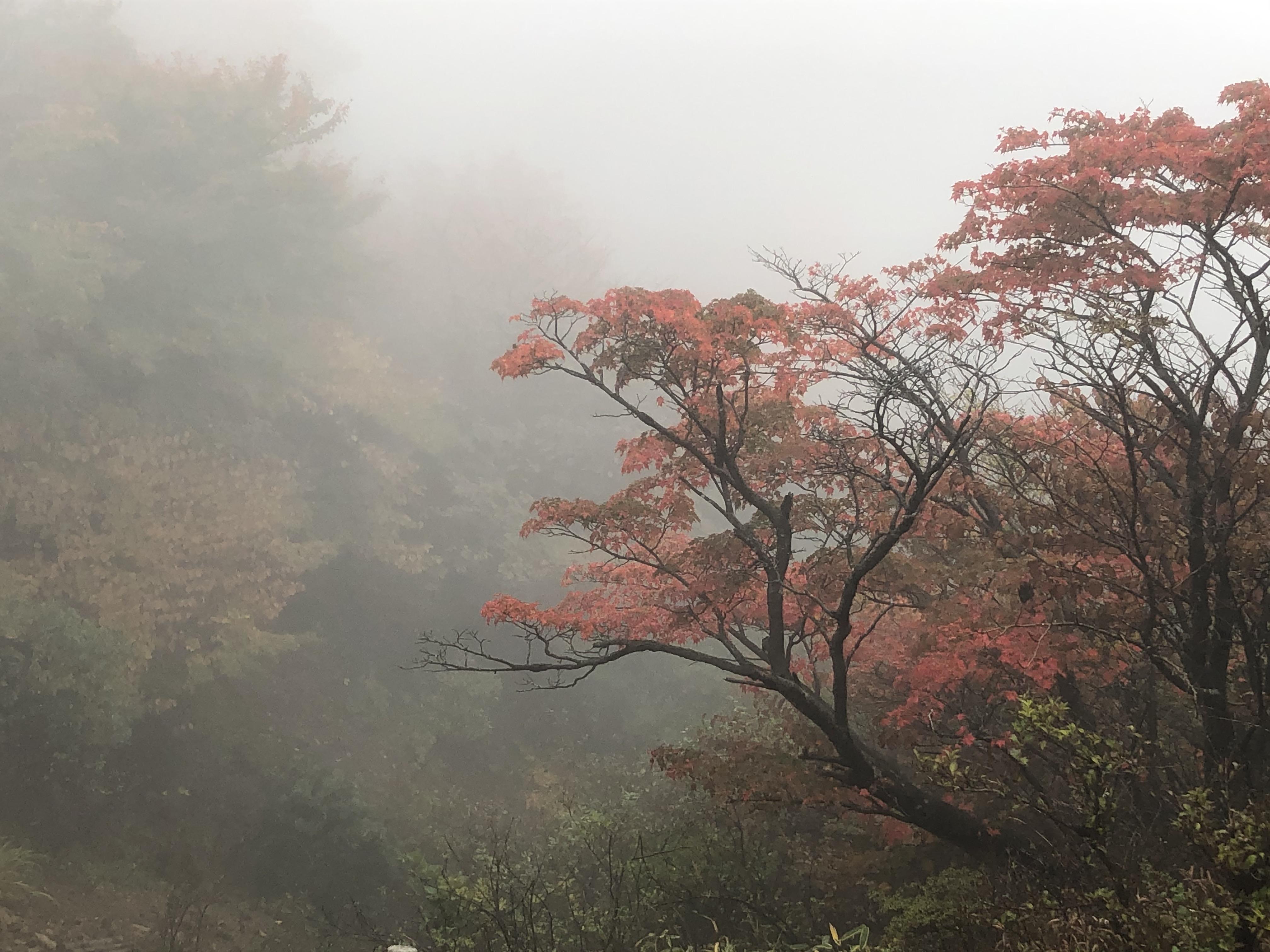 九重山(1,791m)の登頂記録〜日本百名山59座目〜