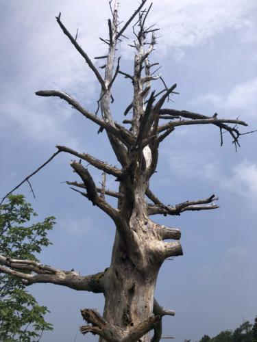 恵那山(2,191m)の登頂記録〜日本百名山60座目〜